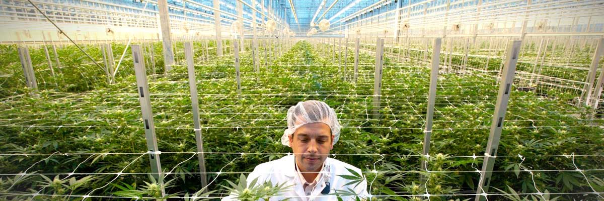 Protecting cannabis industry workers